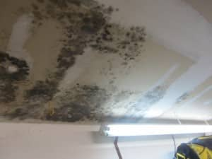 Mould Growth on Ceiling